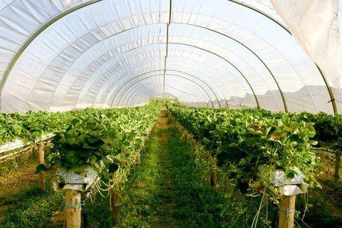 رشد 163 درصدی توسعه گلخانهها در 8 سال اخیر
