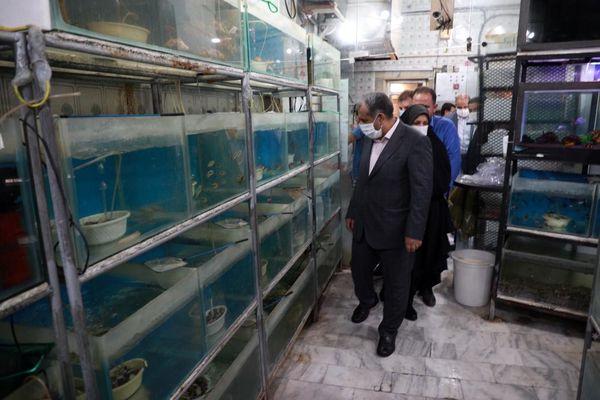 بازدید استاندار قزوین از بزرگترین مرکز تکثیر و پرور ش ماهیان زینتی در کشور