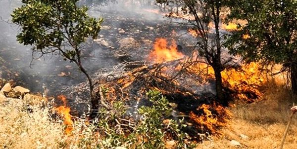 کاهش 93 درصدی حریق در جنگلها و مراتع استان ایلام