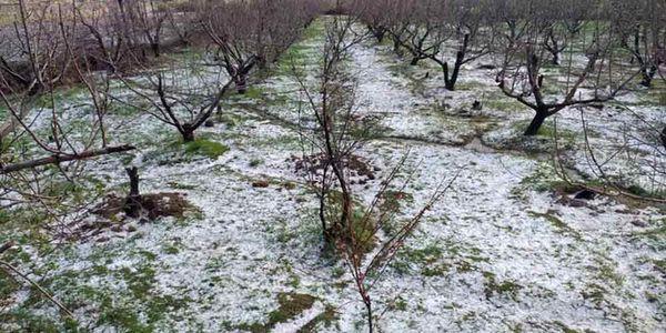 خسارت ۵۰ میلیاردی تگرگ به باغات نطنز
