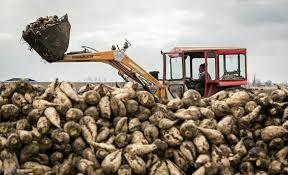 تحویل 18 هزار تن چغندر به کارخانه قند شیروان