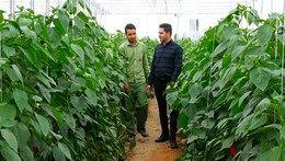 اقبال جوانان تحصیل کرده به توسعه کشت گلخانهای