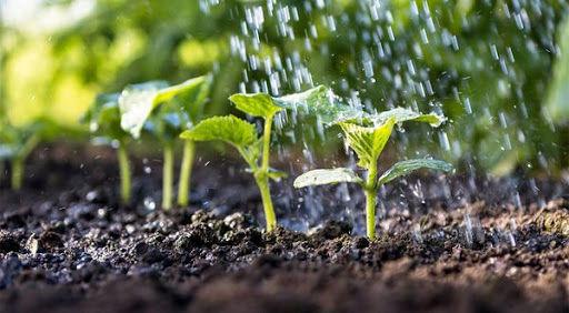آب و خاک ستون فقرات تغذیه ما هستند