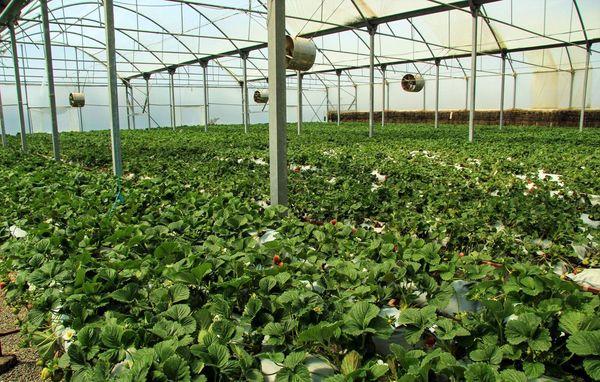 گره کور توسعه چهارمحال و بختیاری با ایجاد شهرکهای کشاورزی باز میشود