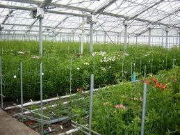 3 طرح کشاورزی در شهرستان بم در هفته دولت به بهره برداری می رسد