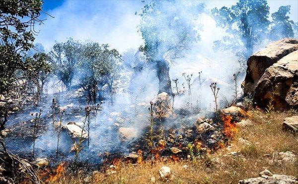 مهار آتشسوزی در جنگل های بلوط دامنه زردکوه بختیاری