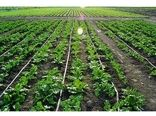 تجهیز 3811 هکتار از اراضی کشاورزی آذربایجان غربی به سیستمهای آبیاری نوین