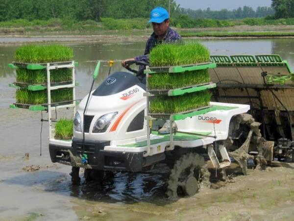 نشاء مکانیزه برنج در 85 درصد شالیزارهای میاندورود