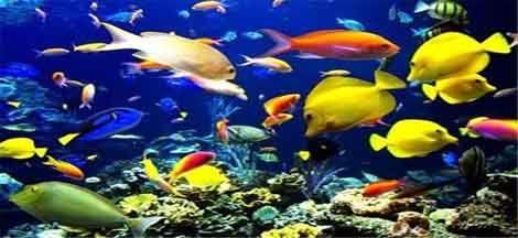 مکانیزاسیون در آبزیپروری راهی برای افزایش بهرهوری