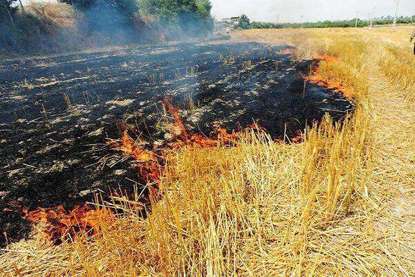 کشاورزان از آتش زدن کاه و کلش در اراضی کشاورزی خودداری کنند