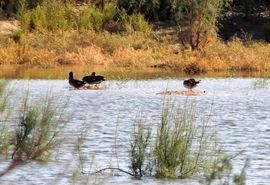 پیشگیری از آنفلوانزای فوق حاد پرندگان در زیستگاههای خوزستان