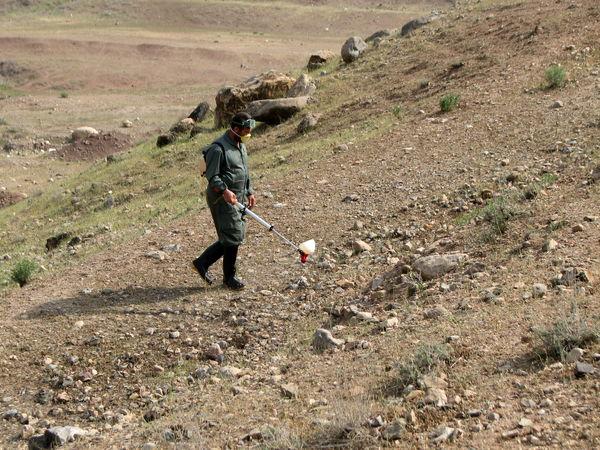 ۲۵۰ هکتار از اراضی قزوین علیه آفت ملخ سم پاشی شدند