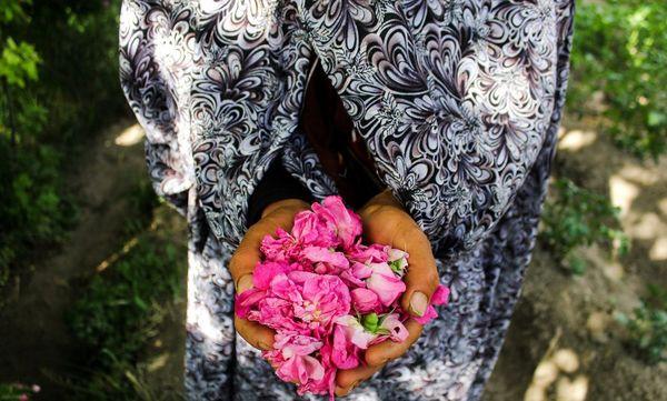 ایجاد خط اعتباری سرمایه در گردش برای صنوف گل و گیاهان زینتی