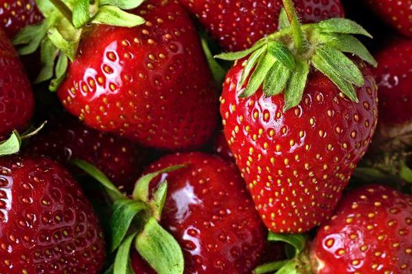 تولید  300 تُن توتفرنگی در چهارمحال و بختیاری
