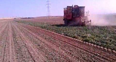 تولید 65 هزار تن چغندر قند در مرودشت