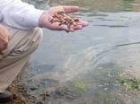 اقدام غیرقانونی انسانی، عامل تلفات گونههای متعدد آبزیان در سد خداآفرین