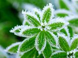 بارش برف فروردین ماه ۹۹ به کام طبیعت به زیان کشاورزان بجنوردی