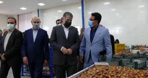بازدید وزیر جهاد کشاورزی از طرح بستهبندی خرما در تنگستان