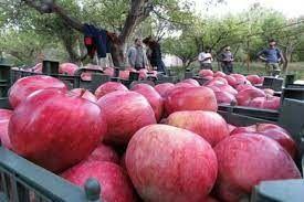قابلیت صادرات 30 هزار تن سیب در خراسان شمالی