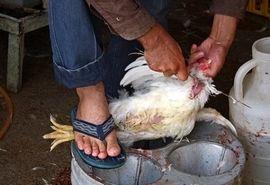 هشدار مدیر کل دامپزشکی خوزستان در خصوص خرید مرغ زنده و به خطر افتادن  سلامت افراد جامعه