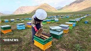 کاهش ۳۰ درصدی تولید عسل در لرستان