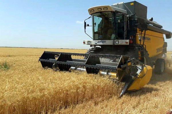 پیشبینی تولید ۱۰۸هزار تن گندم در استان بوشهر