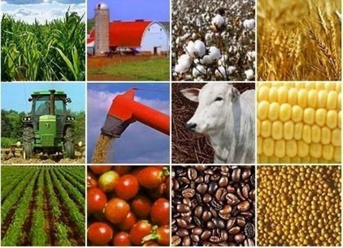 مدیریت زنجیره ارزش محصولات کشاورزی و غذایی کشور یکپارچه می شود