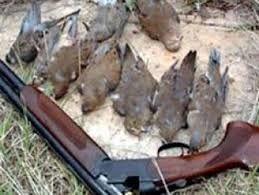 ماموران شکارچیان متخلف را دستگیر کردند