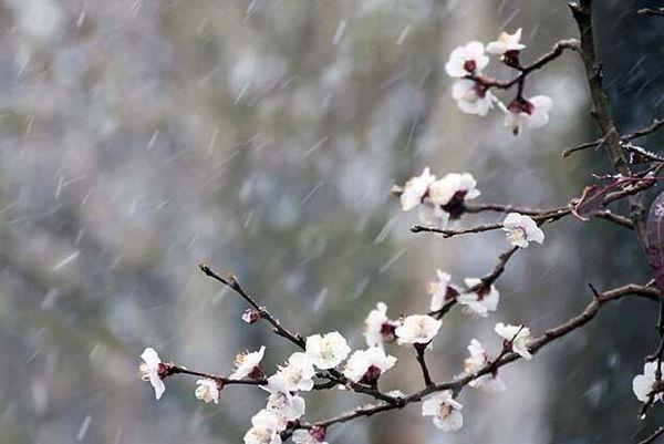 بازدید میدانی و برآورد خسارت سرمازدگی باغات شهرستان سامان