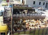 کشف احشام قاچاق به ارزش ۷۵۰ میلیون ریال در ایلام