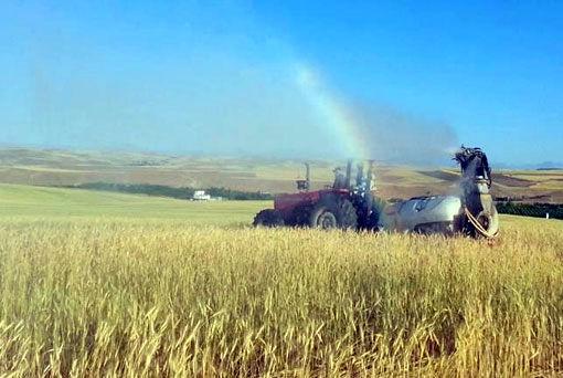 برداشت بیش از 160 هزار تن گندم از مزارع شهرستان هشترود