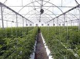 مهلت 3 روزه سرمایهگذاران نهضت گلخانهای جهت تکمیل درخواست
