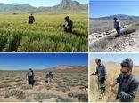 آمادگی شبکه مراقبت و پیش آگاهی شهرستان گرمه در پایش مناطق مختلف برای ملخ صحرایی