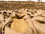خرید تضمینی 78 هزار تن گندم در 15 روز گذشته