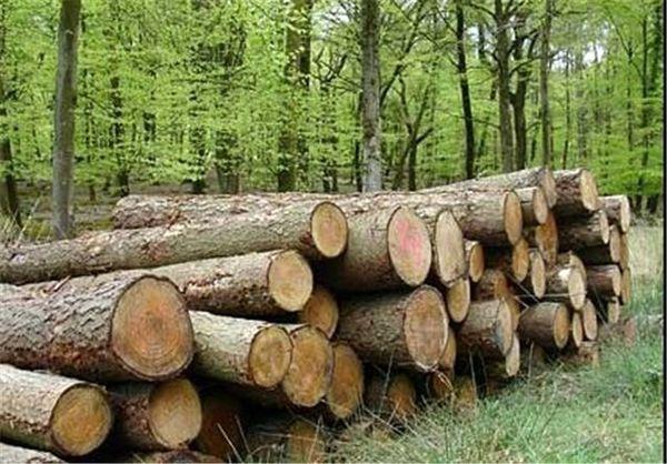 اختصاص بستههای حمایتی برای زارعین چوب