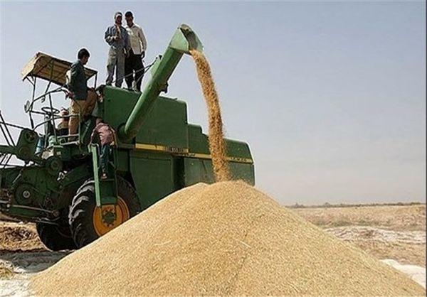 خرید 157 هزارتن گندم و کلزا در استان تهران