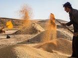خرید تضمینی بیش از 1.6 میلیون تن گندم توسط تشکلهای تعاون روستایی
