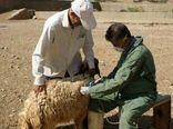 واکسیناسیون بیش از سه میلیون رأس دام برای کنترل آبله گوسفندی در خوزستان