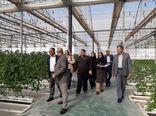 نمایندگان کشورهای روسیه و هند از مجتمع گلخانه ای فراکشت در بهارستان بازدید کردند