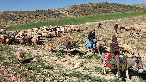 کوچ بهاره عشایر استان فارس آغاز شد