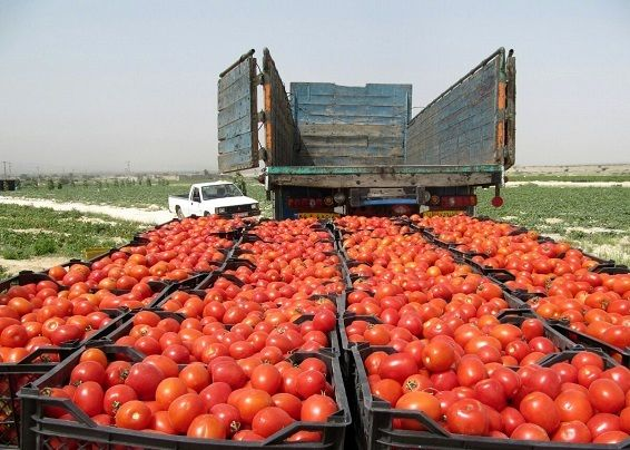 صدور تولیدات کشاورزی خراسان شمالی حدود ۲۷۷ درصد افزایش یافت