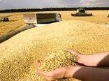 خرید تضمینی  ۱۷هزار تُن گندم در خراسان شمالی