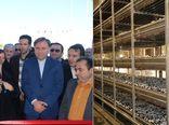 افتتاح بزرگترین واحد تولید قارچ دکمهای گیلان در رشت