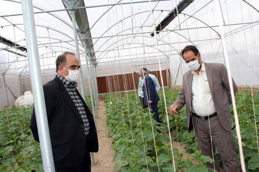 بهره برداری از دومین گلخانه کوچک مقیاس روستای ارسی شهرستان مرند