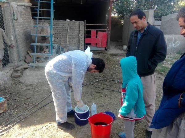 اجرای مرحله سوم واکسیناسیون طیور بومی استان تهران علیه بیماری نیوکاسل