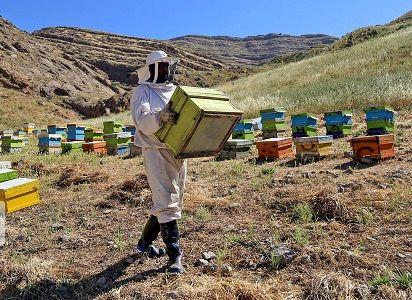 کوچ بهاره زنبورداران به بام ایران