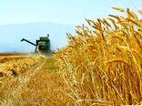 امکان اختلاط گندم و خاک در برداشت مکانیزه وجود ندارد