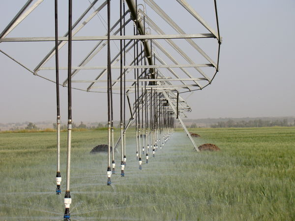 پرداخت 235 میلیارد ریال کمک بلاعوض به بهره برداران طرح های کشاورزی در استان ایلام