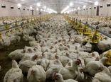 45 درصد مازاد تولید تخم مرغ در استان مرکزی