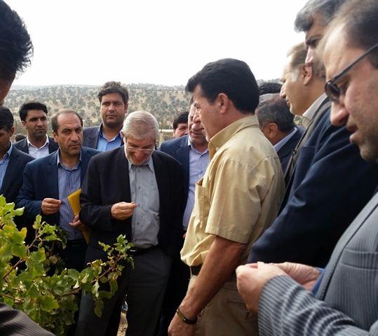 مشارکت بنیاد مستضعفان در توسعه طرح های کشاورزی